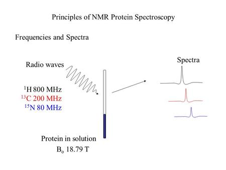Protein in solution Radio waves 1 H 800 MHz 13 C 200 MHz 15 N 80 MHz Spectra Principles of NMR Protein Spectroscopy B o 18.79 T Frequencies and Spectra.