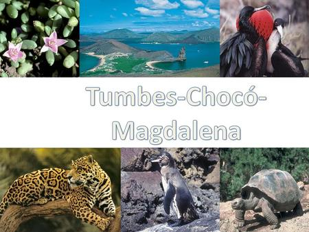 Located in South America. Tumbes –Chocó- Magdalena spans across 4 countries. Panama Colombia including the Malpelo Islands Ecuador including the Galapagos.