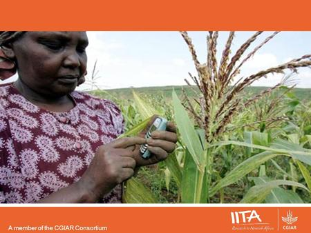 A member of the CGIAR Consortium. Mobile Finance for Agriculture Mireille N'Simire ICT SPECIALIST IITA-CENTRAL AFRICA HUB.