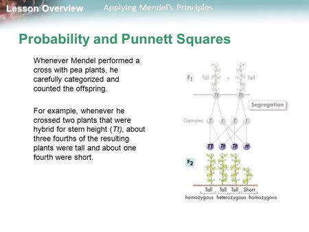 Lesson Overview Lesson Overview Applying Mendel's Principles Probability and Punnett Squares Whenever Mendel performed a cross with pea plants, he carefully.