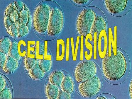 Why Do Cells Need To Divide?  It depends on the organism  Unicellular organisms like bacteria (prokaryotes) divide to reproduce  Multicellular organisms.