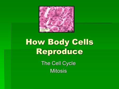 How Body Cells Reproduce The Cell Cycle Mitosis. This is a continuous cycle of growth and division. 2 Phases: -Growth (Interphase) -Division (Mitosis)