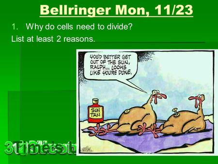 Bellringer Mon, 11/23 1.Why do cells need to divide? List at least 2 reasons.