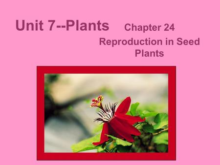 Unit 7--Plants Chapter 24 Reproduction in Seed Plants.