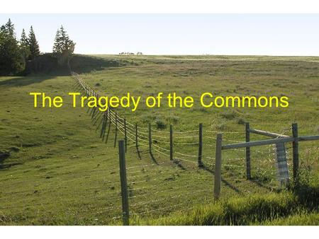 "hardins essay on tragedy of the commons The tragedy of the commons we will write a custom essay sample on ""the tragedy of the commons"" by garrett hardin specifically for you for only $1638 $139/page."