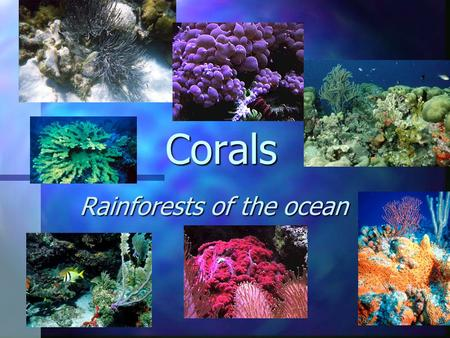 Corals Rainforests of the ocean. What does this map show?