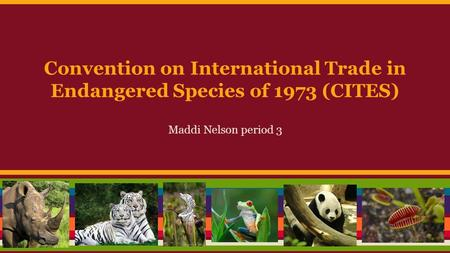 Convention on International Trade in Endangered Species of 1973 (CITES) Maddi Nelson period 3.