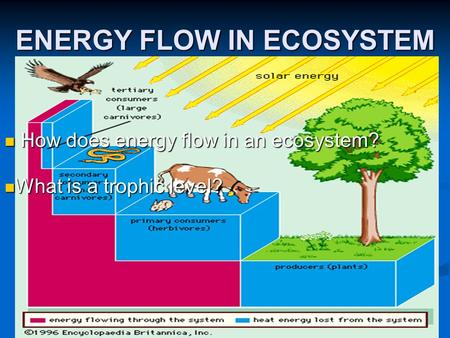 ENERGY FLOW IN ECOSYSTEM How does energy flow in an ecosystem? How does energy flow in an ecosystem? What is a trophic level? What is a trophic level?