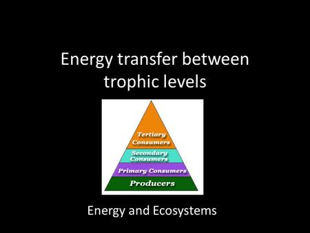Energy transfer between trophic levels Energy and Ecosystems.