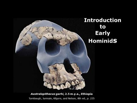 Australopithecus garhi, 2.5 m.y.a., Ethiopia Turnbaugh, Jurmain, Kilgore, and Nelson, 8th ed., p. 235 Introduction to Early Hominid s.