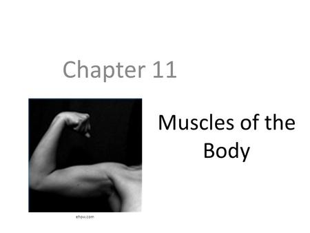 Muscles of the Body Chapter 11 ehow.com. Objectives Know the five main shapes of muscle Understand how muscles fit into functional groups and what those.
