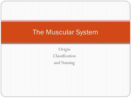 Origin Classification and Naming The Muscular System.