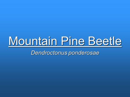 Mountain Pine Beetle Dendroctonus ponderosae. Background Information on the Mountain Pine Beetle Species of bark beetle Native to forests on the west.