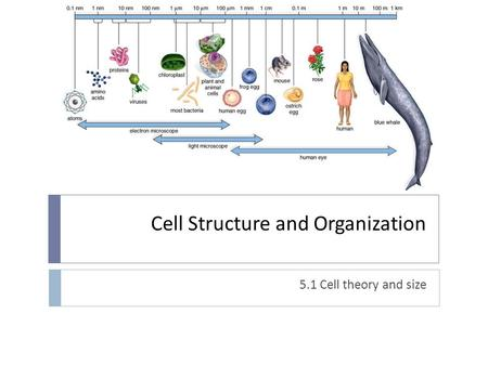 Cell Structure and Organization 5.1 Cell theory and size.