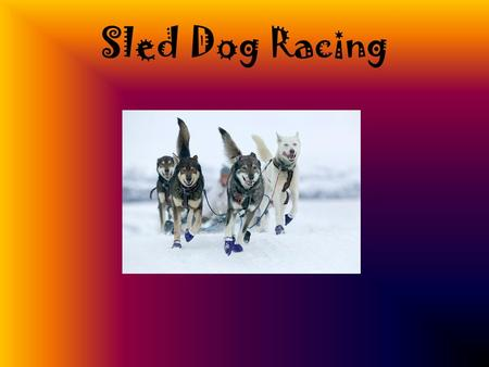 "Sled Dog Racing. Iditarod A race over 1150 miles in 10 to 17days Has been known as the ""Last Great Race On Earth"" and has won worldwide interest. Temperatures."