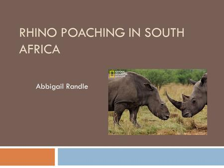 RHINO POACHING IN SOUTH AFRICA Abbigail Randle. Background  South Africa is home to more than 80% of Africa's rhino populations.  Rhinos are poached.