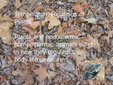 Temperature Relations of Plants Plants and endothermic homeothermic animals differ in how they regulate their body temperature.