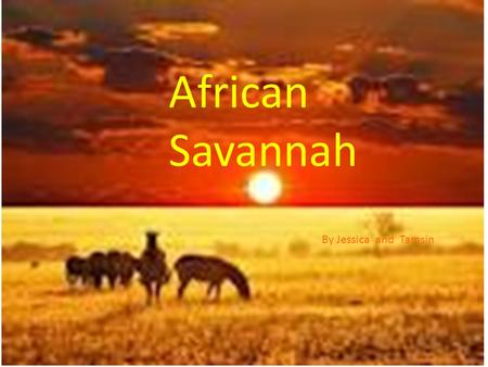 African Savannah By Jessica and Tamsin. Facts. The African Savanna grasslands are expansive areas with scattered trees that lie between the continents.