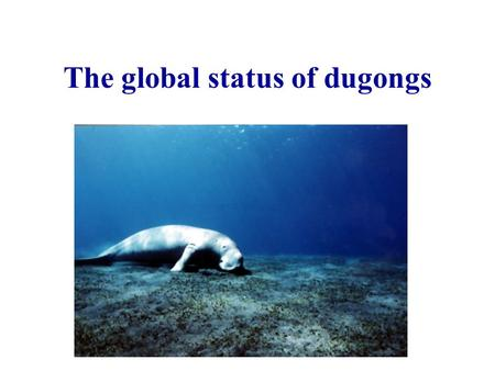 The global status of dugongs. Conservation significance of dugongs Only member of family Dugongidae Only strictly marine herbivorous mammal Largest population.