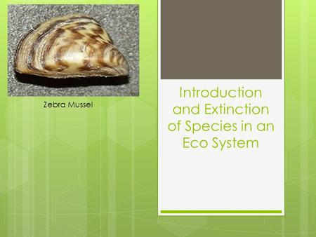 Introduction and Extinction of Species in an Eco System Zebra Mussel.