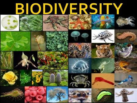 Questions to be Answered What is biodiversity, why is it important, and more importantly why should I care? What are invasive species and how can they.