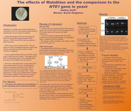 The effects of Malathion and the comparison to the NTE1 gene in yeast Ashley Swift Mentor: David Singleton Introduction : Malathion is a widely used organophosphorous.