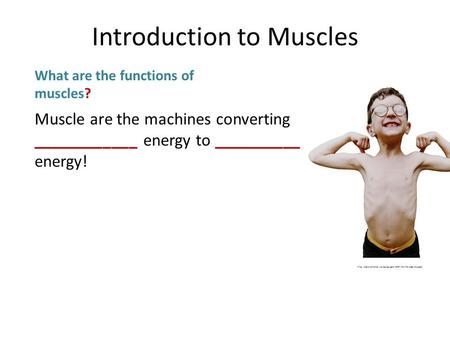 Muscle are the machines converting ____________ energy to __________ energy! What are the functions of muscles?