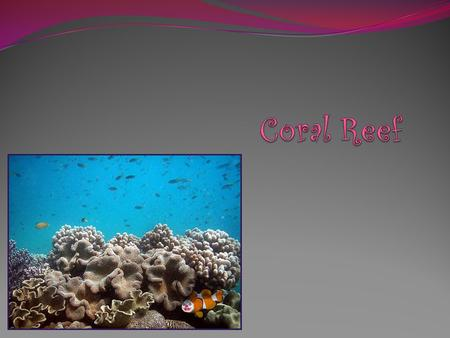 Coral Reefs include the highest concentrations of marine species to be found in any of Earth's aquatic ecosystems.