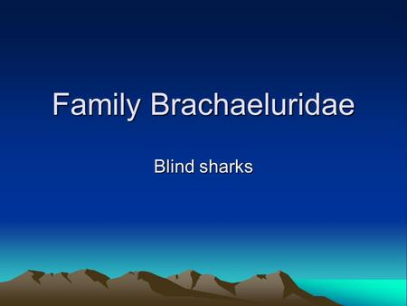 Family Brachaeluridae Blind sharks. Classification Kingdom Animalia Phylum Chordata Class chondrichthyes Order Family Brachaeluridae 2 Genera 2 species.