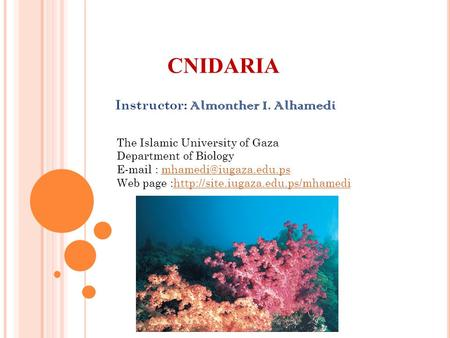 CNIDARIA Instructor: Almonther I. Alhamedi The Islamic University of Gaza Department of Biology   Web.