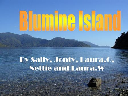 By Sally, Jonty, Laura.O, Nettie and Laura.W. Introduction to Blumine Island Blumine is situated in the Queen Charlotte Sounds. It was 100% pure native.