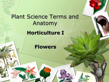 Plant Science Terms and Anatomy Horticulture I Flowers Horticulture I Flowers.