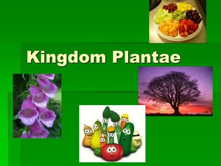 Kingdom Plantae. Parts of a Plant- What do you remember from kindergarten?  Seed  Roots  Stem  Leaves  Flower.