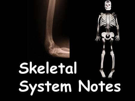 Skeletal System Notes. Your body has two organ systems that work together to provide support & help you move– the skeletal system & the muscular system.