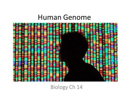 Human Genome Biology Ch 14. Chromosomes Karyotype – picture of all chromosomes grouped in pairs Carries genetic information from parents to offspring.