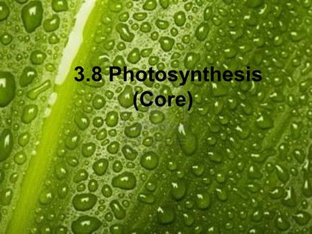 3.8 Photosynthesis (Core). 3.8.1 State that photosynthesis involves the conversion of light energy into chemical energy. 3.8.2 State that light from the.