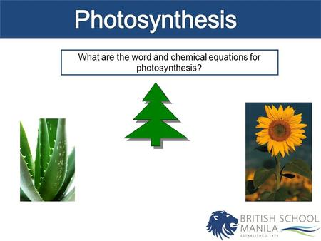 What are the word and chemical equations for photosynthesis?