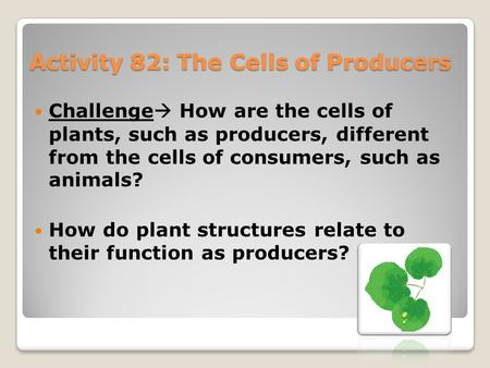 Activity 82: The Cells of Producers Challenge  How are the cells of plants, such as producers, different from the cells of consumers, such as animals?