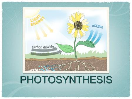 PHOTOSYNTHESIS. What is the role of CO 2 in photosynthesis? Plants USE carbon dioxide to carry out photosynthesis. We can determine the presence of CO.