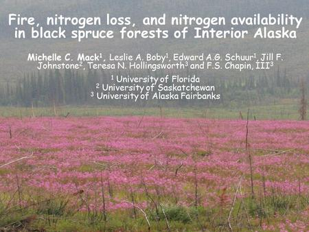 Fire, nitrogen loss, and nitrogen availability in black spruce forests of Interior Alaska Michelle C. Mack 1, Leslie A. Boby 1, Edward A.G. Schuur 1, Jill.