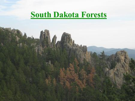 South Dakota Forests. Forest Types Black Hills Flood Plain Forest Upland Forest Windbreaks and urban forests.