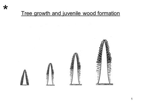 Tree growth and juvenile wood formation