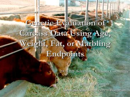 Genetic Evaluation of Carcass Data Using Age, Weight, Fat, or Marbling Endpoints 2003 BIF Selection Decisions Committee May 29, 2003 Janice M. Rumph Montana.
