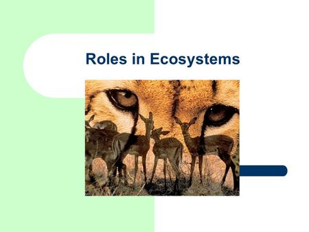 Roles in Ecosystems. Habitat – A ____________ is the place an organism lives.