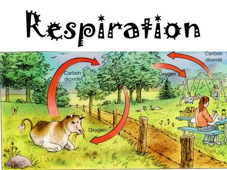 Respiration. To stay alive, cells need: 1.Food 2.Energy 3.To get rid of waste 4.To reproduce.