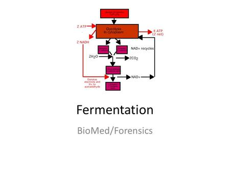 Fermentation BioMed/Forensics. KEY CONCEPT Fermentation allows the production of a small amount of ATP without oxygen.