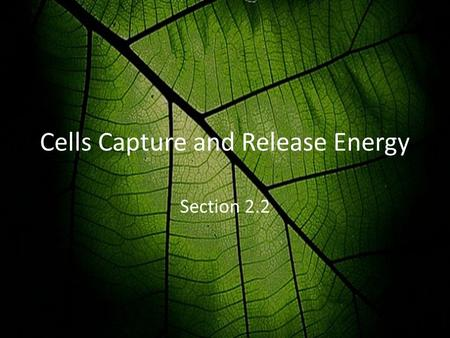 Cells Capture and Release Energy Section 2.2. Energy Energy is needed by organisms to stay alive – Plants get energy from the sun – Animals get energy.
