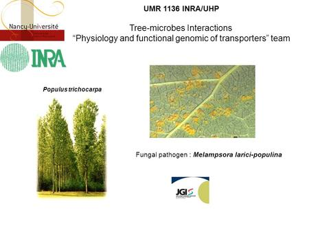 "UMR 1136 INRA/UHP Tree-microbes Interactions ""Physiology and functional genomic of transporters"" team Fungal pathogen : Melampsora larici-populina Populus."