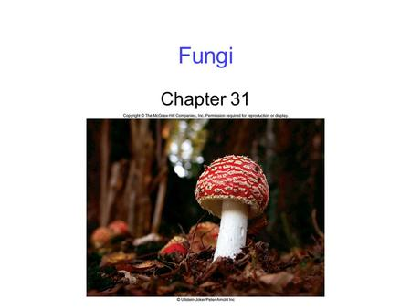 Fungi Chapter 31. 2 Defining Fungi Mycologists believe there may be as many as 1.5 million fungal species Fungi are classified into six main groups -Chytrids.