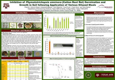 Inhibition of Phymatotrichopsis omnivora (Cotton Root Rot) Germination and Growth in Soil following Application of Various Oilseed Meals Ping Hu 1, Autumn.